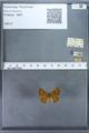http://mczbase.mcz.harvard.edu/specimen_images/ent-lepidoptera/images/2009_12_16/IMG_027267.JPG