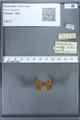 http://mczbase.mcz.harvard.edu/specimen_images/ent-lepidoptera/images/2009_12_16/IMG_027268.JPG