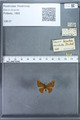 http://mczbase.mcz.harvard.edu/specimen_images/ent-lepidoptera/images/2009_12_16/IMG_027269.JPG