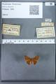 http://mczbase.mcz.harvard.edu/specimen_images/ent-lepidoptera/images/2009_12_16/IMG_027270.JPG