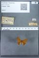 http://mczbase.mcz.harvard.edu/specimen_images/ent-lepidoptera/images/2009_12_16/IMG_027271.JPG