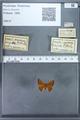 http://mczbase.mcz.harvard.edu/specimen_images/ent-lepidoptera/images/2009_12_16/IMG_027272.JPG