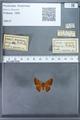 http://mczbase.mcz.harvard.edu/specimen_images/ent-lepidoptera/images/2009_12_16/IMG_027273.JPG