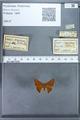 http://mczbase.mcz.harvard.edu/specimen_images/ent-lepidoptera/images/2009_12_16/IMG_027274.JPG