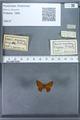 http://mczbase.mcz.harvard.edu/specimen_images/ent-lepidoptera/images/2009_12_16/IMG_027275.JPG