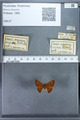 http://mczbase.mcz.harvard.edu/specimen_images/ent-lepidoptera/images/2009_12_16/IMG_027277.JPG