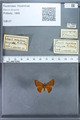 http://mczbase.mcz.harvard.edu/specimen_images/ent-lepidoptera/images/2009_12_16/IMG_027279.JPG