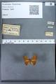 http://mczbase.mcz.harvard.edu/specimen_images/ent-lepidoptera/images/2009_12_16/IMG_027280.JPG