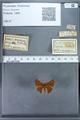 http://mczbase.mcz.harvard.edu/specimen_images/ent-lepidoptera/images/2009_12_16/IMG_027281.JPG