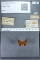 http://mczbase.mcz.harvard.edu/specimen_images/ent-lepidoptera/images/2009_12_16/IMG_027282.JPG
