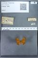 http://mczbase.mcz.harvard.edu/specimen_images/ent-lepidoptera/images/2009_12_16/IMG_027283.JPG