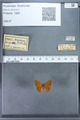 http://mczbase.mcz.harvard.edu/specimen_images/ent-lepidoptera/images/2009_12_16/IMG_027285.JPG