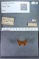 http://mczbase.mcz.harvard.edu/specimen_images/ent-lepidoptera/images/2009_12_16/IMG_027286.JPG