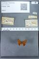 http://mczbase.mcz.harvard.edu/specimen_images/ent-lepidoptera/images/2009_12_16/IMG_027287.JPG