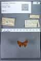 http://mczbase.mcz.harvard.edu/specimen_images/ent-lepidoptera/images/2009_12_16/IMG_027288.JPG