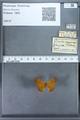 http://mczbase.mcz.harvard.edu/specimen_images/ent-lepidoptera/images/2009_12_16/IMG_027290.JPG