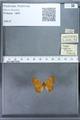 http://mczbase.mcz.harvard.edu/specimen_images/ent-lepidoptera/images/2009_12_16/IMG_027291.JPG