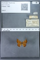 http://mczbase.mcz.harvard.edu/specimen_images/ent-lepidoptera/images/2009_12_16/IMG_027292.JPG