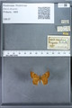 http://mczbase.mcz.harvard.edu/specimen_images/ent-lepidoptera/images/2009_12_16/IMG_027295.JPG