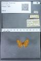 http://mczbase.mcz.harvard.edu/specimen_images/ent-lepidoptera/images/2009_12_16/IMG_027297.JPG