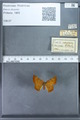 http://mczbase.mcz.harvard.edu/specimen_images/ent-lepidoptera/images/2009_12_16/IMG_027299.JPG