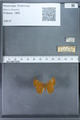 http://mczbase.mcz.harvard.edu/specimen_images/ent-lepidoptera/images/2009_12_16/IMG_027300.JPG