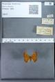 http://mczbase.mcz.harvard.edu/specimen_images/ent-lepidoptera/images/2009_12_16/IMG_027302.JPG