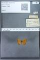 http://mczbase.mcz.harvard.edu/specimen_images/ent-lepidoptera/images/2009_12_16/IMG_027303.JPG