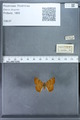 http://mczbase.mcz.harvard.edu/specimen_images/ent-lepidoptera/images/2009_12_16/IMG_027304.JPG