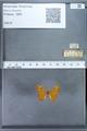 http://mczbase.mcz.harvard.edu/specimen_images/ent-lepidoptera/images/2009_12_16/IMG_027305.JPG