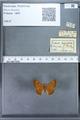 http://mczbase.mcz.harvard.edu/specimen_images/ent-lepidoptera/images/2009_12_16/IMG_027307.JPG