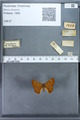 http://mczbase.mcz.harvard.edu/specimen_images/ent-lepidoptera/images/2009_12_16/IMG_027308.JPG