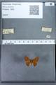 http://mczbase.mcz.harvard.edu/specimen_images/ent-lepidoptera/images/2009_12_16/IMG_027309.JPG