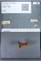http://mczbase.mcz.harvard.edu/specimen_images/ent-lepidoptera/images/2009_12_16/IMG_027310.JPG