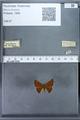 http://mczbase.mcz.harvard.edu/specimen_images/ent-lepidoptera/images/2009_12_16/IMG_027311.JPG