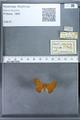 http://mczbase.mcz.harvard.edu/specimen_images/ent-lepidoptera/images/2009_12_16/IMG_027313.JPG