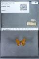 http://mczbase.mcz.harvard.edu/specimen_images/ent-lepidoptera/images/2009_12_16/IMG_027315.JPG
