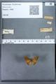 http://mczbase.mcz.harvard.edu/specimen_images/ent-lepidoptera/images/2009_12_16/IMG_027316.JPG