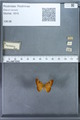 http://mczbase.mcz.harvard.edu/specimen_images/ent-lepidoptera/images/2009_12_16/IMG_027317.JPG
