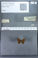 http://mczbase.mcz.harvard.edu/specimen_images/ent-lepidoptera/images/2009_12_16/IMG_027318.JPG