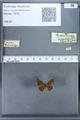 http://mczbase.mcz.harvard.edu/specimen_images/ent-lepidoptera/images/2009_12_16/IMG_027319.JPG