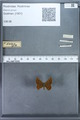 http://mczbase.mcz.harvard.edu/specimen_images/ent-lepidoptera/images/2009_12_16/IMG_027320.JPG