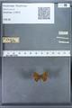http://mczbase.mcz.harvard.edu/specimen_images/ent-lepidoptera/images/2009_12_16/IMG_027323.JPG