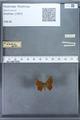 http://mczbase.mcz.harvard.edu/specimen_images/ent-lepidoptera/images/2009_12_16/IMG_027326.JPG