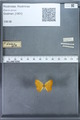 http://mczbase.mcz.harvard.edu/specimen_images/ent-lepidoptera/images/2009_12_16/IMG_027330.JPG