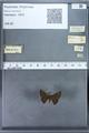 http://mczbase.mcz.harvard.edu/specimen_images/ent-lepidoptera/images/2009_12_16/IMG_027331.JPG