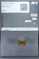 http://mczbase.mcz.harvard.edu/specimen_images/ent-lepidoptera/images/2009_12_16/IMG_027332.JPG