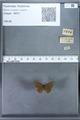 http://mczbase.mcz.harvard.edu/specimen_images/ent-lepidoptera/images/2009_12_16/IMG_027333.JPG