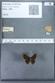 http://mczbase.mcz.harvard.edu/specimen_images/ent-lepidoptera/images/2009_12_16/IMG_027334.JPG