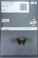 http://mczbase.mcz.harvard.edu/specimen_images/ent-lepidoptera/images/2009_12_16/IMG_027335.JPG
